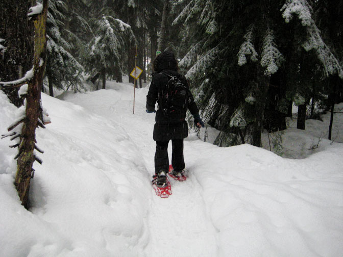Snowshoeing Cypress Mountain