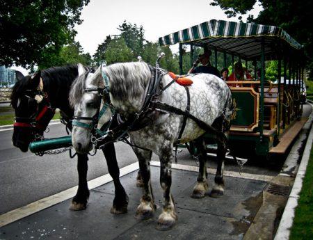 Rutas turísticas por Stanley Park en carruaje de caballos
