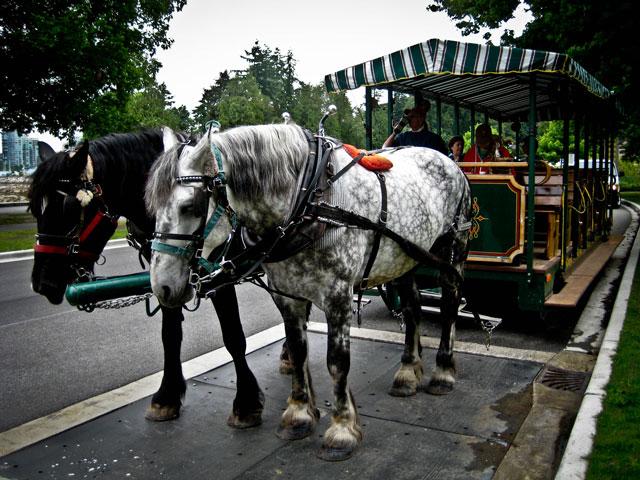 Paseos en caballo Stanley Park
