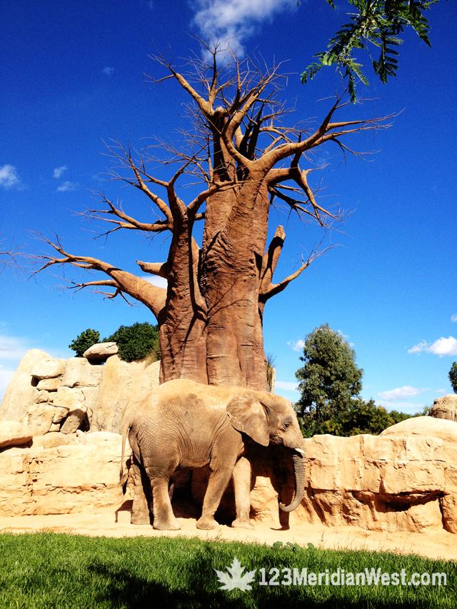 Bioparc Valencia, elefantes