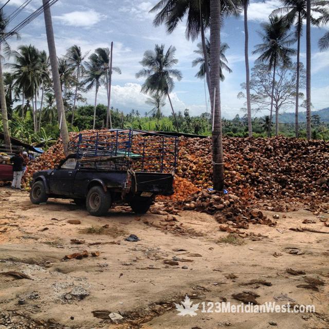 Koh Samui, isla Tailandia, cocos